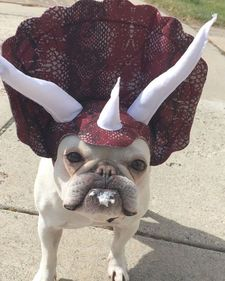 best-dogs-in-costumes-ideas-only-on-pinterest-puppies-in-dogs-in-costumes-l-0736804fdd4d46a3
